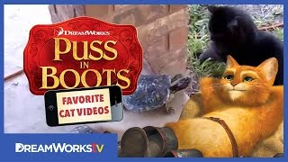 Cat and Turtle | PUSS IN BOOTS FAVORITE CAT VIDEOS