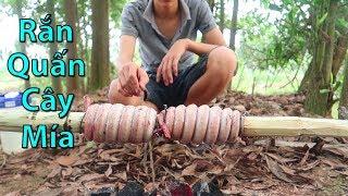 Hữu Bộ | Rắn Quấn Cây Mía | Rắn Nướng Mía | Grilled Snake