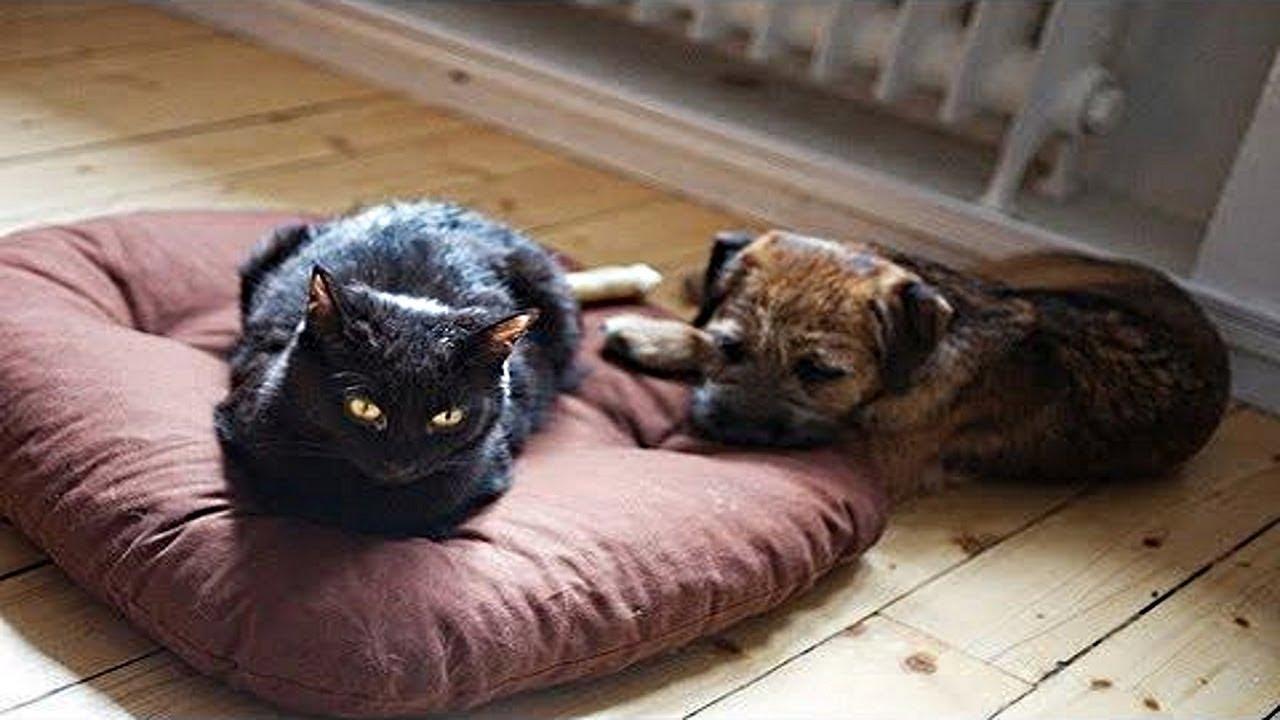 Купить домики для кошек, мягкие места и лежанки в интернет магазине 3рифа. Домики на любой вкус: большие, маленькие, мягкие, на зиму и с креплением на стену с доставкой по харькову и всей украине. Лежак trixie двухсторонний – практичное и стильное спальное место для отдыха вашего питомца.