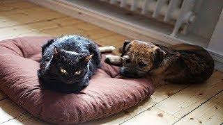 Наглые коты которые отжали спальное место у собак Приколы кошки и собаки