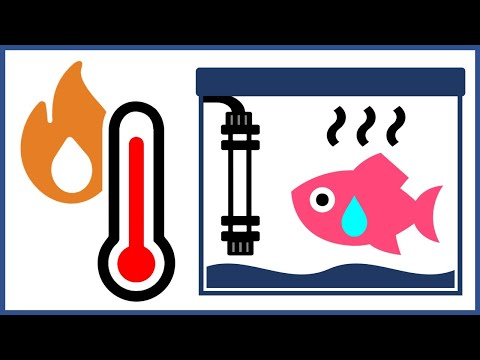 How To Protect Your Fish From Heater Failure
