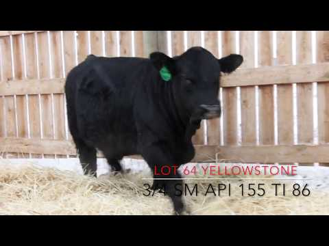Open Gate Ranch Simmental - All The Bull