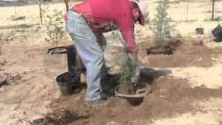 Planting in Root Control Bags