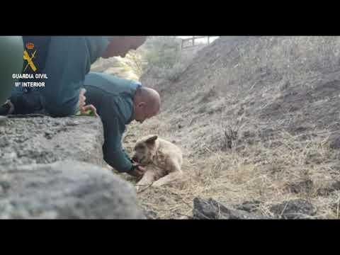 La Guardia Civil rescata a un perro en el incendio de Gran Canaria