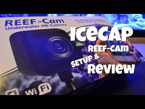 The IceCap Reef Cam Review and Setup