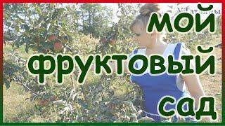 Плодовый сад (35 фото): видео-инструкция по уходу своими руками, как посадить, фото