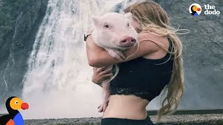 Pampered Pig Travels the World and Lives the Good Life | The Dodo