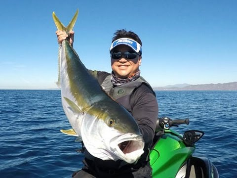 Jet ski fishing big yellows at the box canyon dana for Fish count dana point