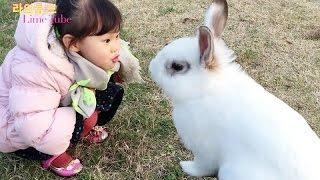 선유도 공원에서 깡총깡총 뛰는 아기 토끼 애완동물 키우기 Raising Baby Rabbits Pets Play Игрушки 라임튜브
