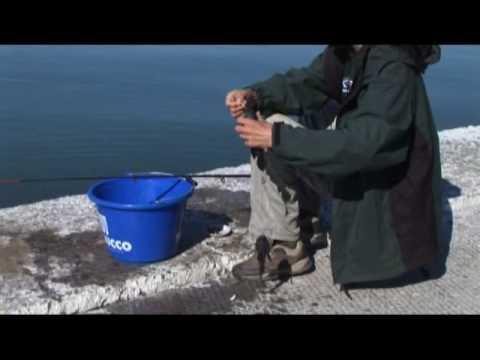 клев рыбы на азовском море