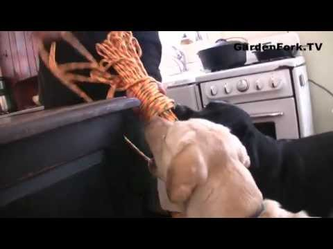 homemade-dog-toy,-how-to-make-it---gardenfork