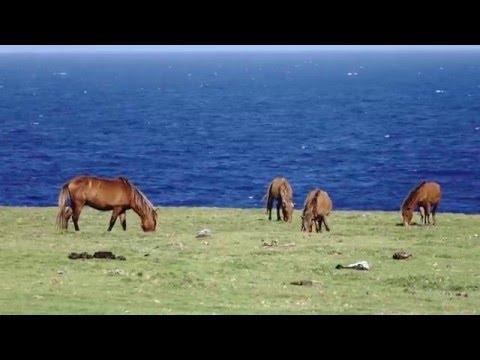 real life in islands 〜沖縄の離島〜 スペシャルムービー 与那国島ver.【リトハク】