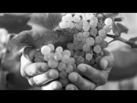 Vinum Nobile advertising clip www vinumnobile sk
