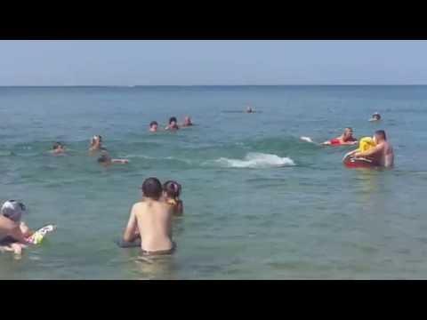 Игра дельфинов с купающимися у берега Анапы