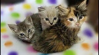 母猫とはぐれた子猫の姉妹と道路で孤独に彷徨っていた1匹の子猫。3匹を会わせてみたところ、威嚇から猫団子に・・・【nekoの部屋】