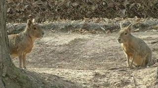 Зоопарк Януковича нечем кормить (новости)