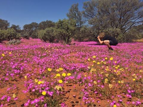 Wildflowers Western Australia 2016