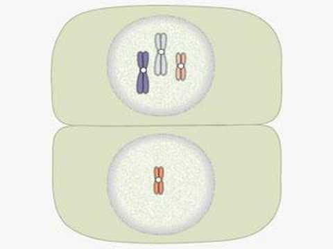 Monosomy