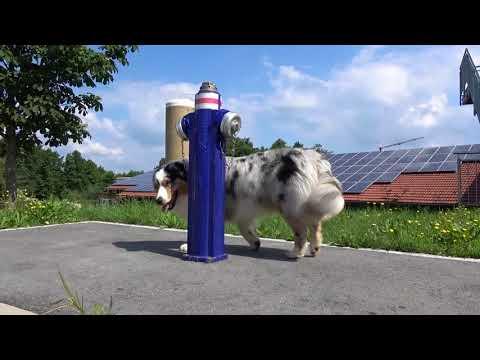 101 Dog Tricks by Australian Shepherd Clooney