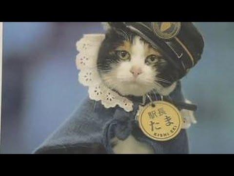 Кошки в Японии - 日本