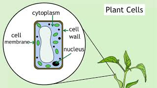 Intro to Cells  Animals & Plants   Biology for All   FuseSchool
