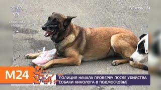 Полиция начала проверку после убийства собаки кинолога в Подмосковье - Москва 24