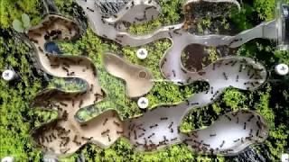 Ферма муравьев