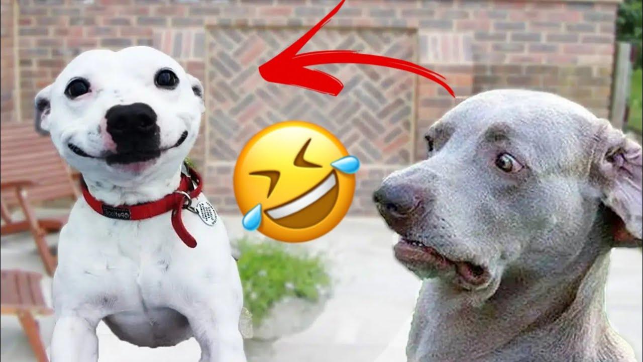 🤣 si NO te RÍES no eres HUMANO 🐱🐶 Animales Chistosos para Reír