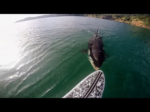 TOP TEN Killer Whale (Orca) Encounters Caught On Tape