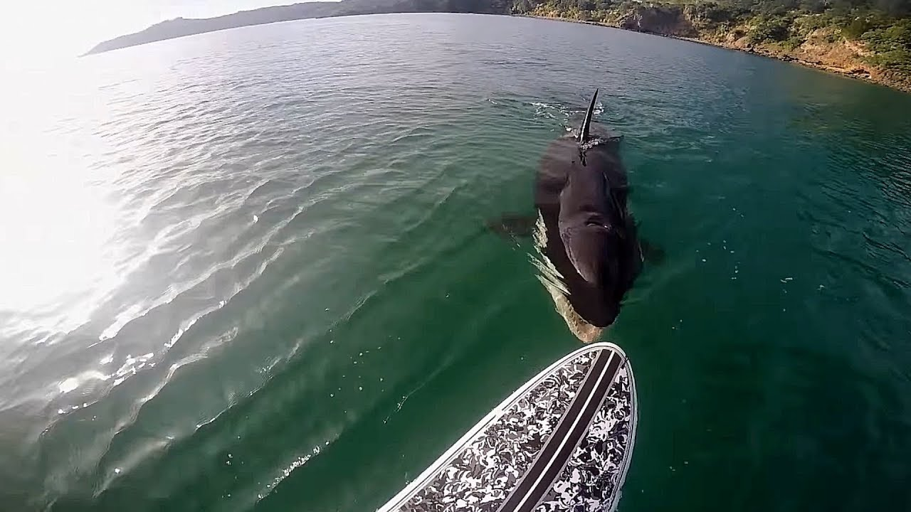 Download TOP TEN Killer Whale (Orca) Encounters Caught On Tape