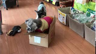 こんにちわん♪ とある定休日の日… アイドル犬ウルル(ピンクの服の子)・...