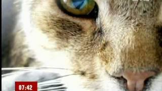 Сухой нос у кошки(Ветеринарный центр