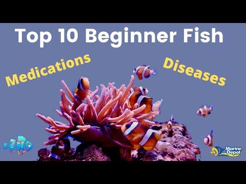 Top 10 Beginner Fish, Treatment, & Medications | Episode 05 | Saltwater Aquariums Demystified