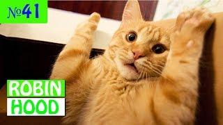 ПРИКОЛЫ 2017 с животными. Смешные Коты, Собаки, Попугаи // Funny Dogs Cats Compilation. Февраль №41