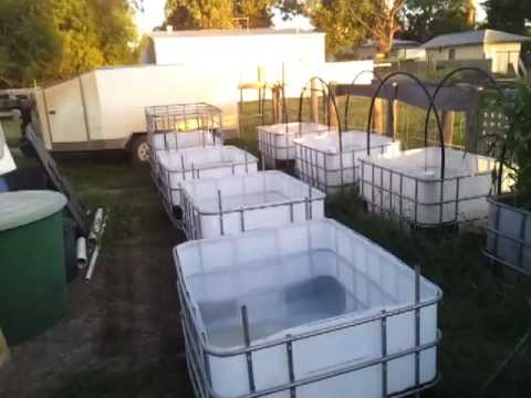 Wicking Ibc Garden Beds 10th December 2011 Youtube
