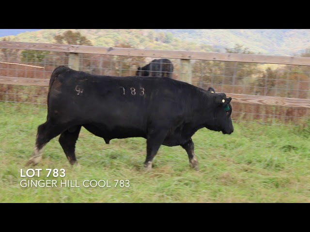 Ginger Hill Angus Lot 783