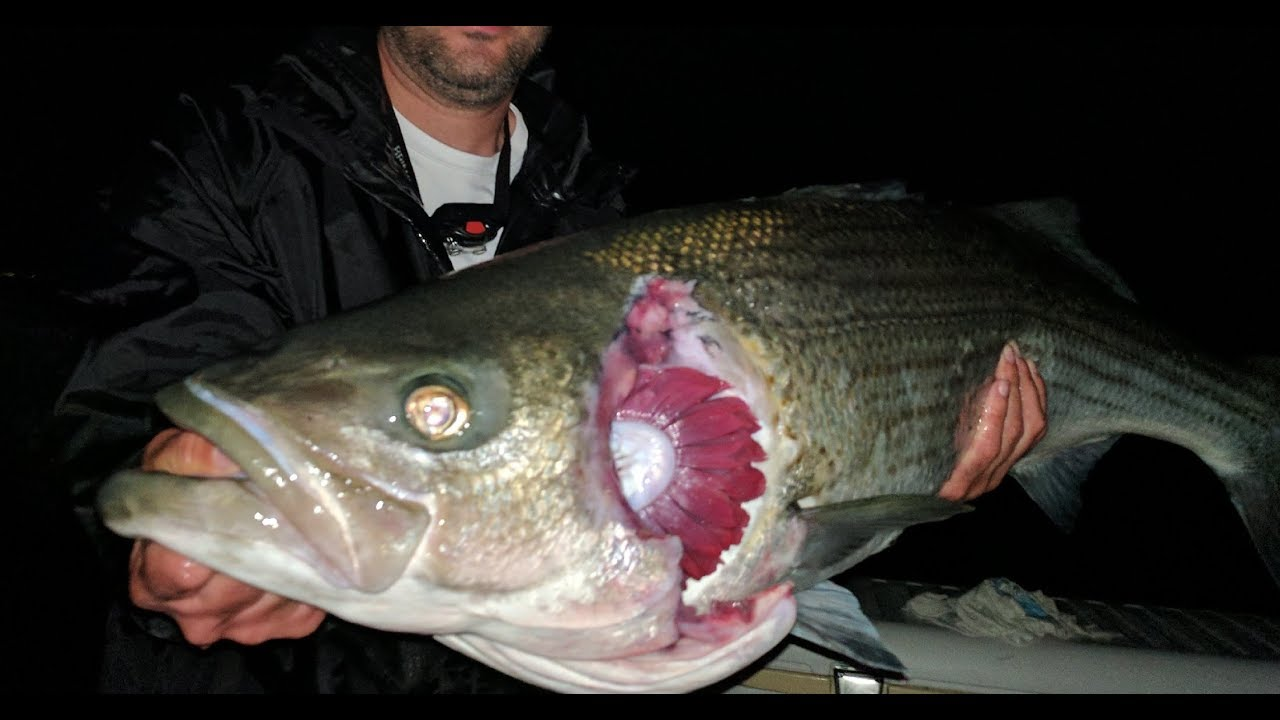 East river monsters hunting for the legendary zombie fish for Fishing in new york