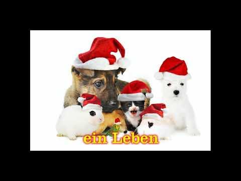 Weihnachte Tiere verschnenken...