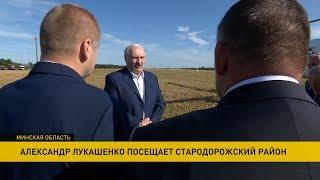 Лукашенко раскритиковал чиновников за падёж крупного рогатого скота
