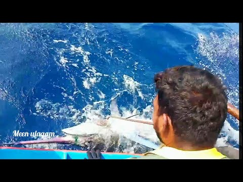 Unbelievable Big Swordfish  Caught Nadukuppam Fisherman