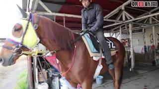 「伝説」のアラブ馬、その名も「ザラストアラビアン」