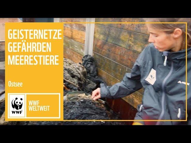 Ostsee: Geisternetze gefährden Meerestiere | WWF weltweit | WWF Deutschland