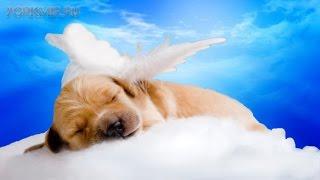 Как пережить смерть собаки | Советы психолога.