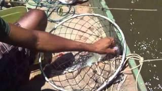 pesca robalo no rio mucuri -ba 1