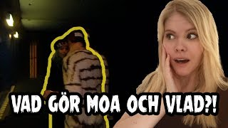Hånglar Vlad & Moa på Joakim Lundells konsert?