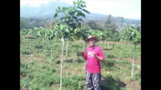 Agroforestry Project for Land Reclamation in Indonesia #Action4Climate competition @Connect4Climate