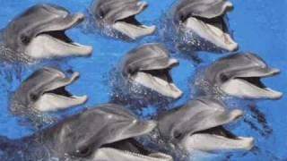 Tangerine Dream - Dolphin Dance