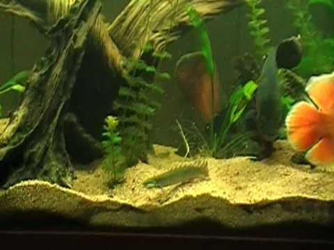 planted oscar tank part 2