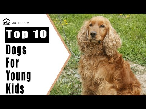 Best Dogs For Kids - Top 10 Dog Breeds Suitable For Young Kids