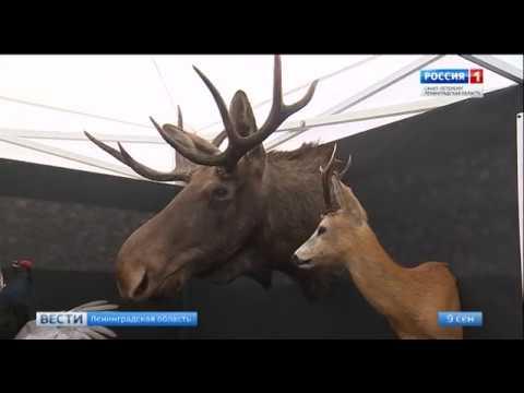 В Ленинградской области отметили День охотника